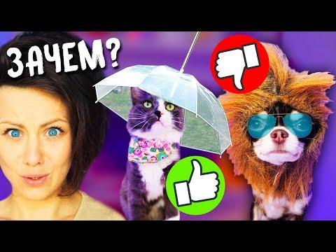 ТОП 5 безумных ТОВАРОВ ЗОНТ для собаки МАССАЖ ЩЁК для кошки Петшопинг для ЖИВОТНЫХ с Алиэкспресс