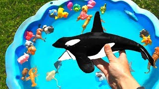 Sea Animals For Kids Learn Colors With Blue Pool and Wild Animal Toys For Kids