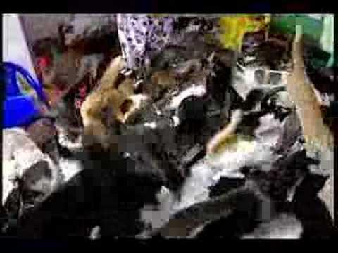 House Has Too Many Cats