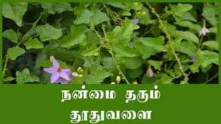 Health benefits of thuthuvalai in tamil