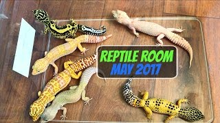 Reptile Room Tour May 2017