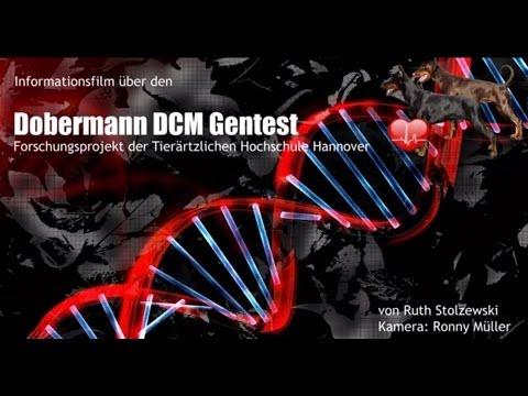 Dobermann DCM Gentest TiHo Hannover