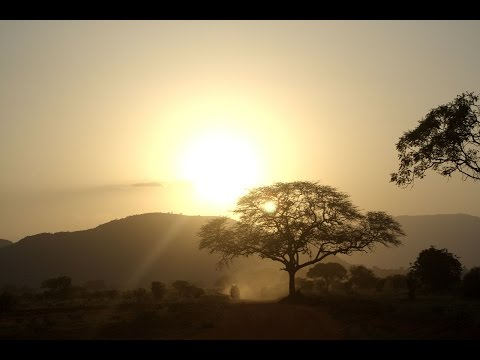 Nature Sounds, 1 Hour of Birdsong and Tree frogs from Africa