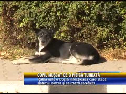 Copil Muscat De O Pisica Turbata video
