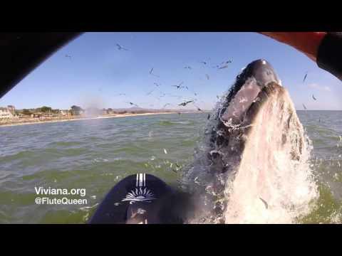 Una surfista a punto de ser aplastada por una ballena es sensación en YouTube