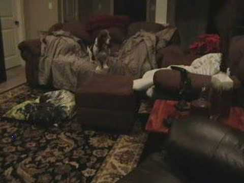 Basset hound suffers separation anxiety! Dog howling