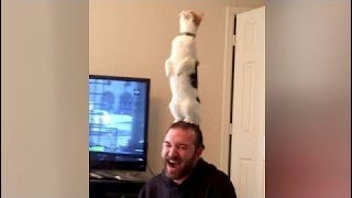 kids vs animals Are This The Best Cat Fails You've Ever Seen Or What?! - Extremely Funny Cat Compil
