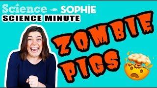 Science Minute: ZOMBIE PIGS | Science News