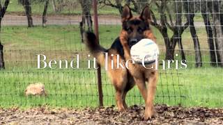 Funny German Shepherd who can Bend it like Beckham
