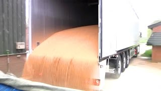 Grain in Knapen Moving Floor Trailer Video