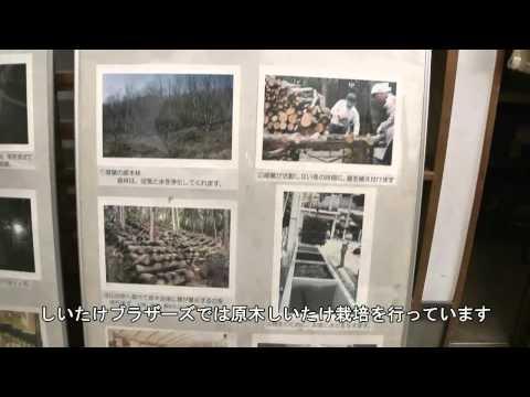 川辺町 「しいたけブラザーズ」 ~原木しいたけ栽培~