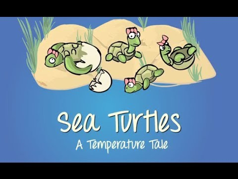 Sea Turtles: A Temperature Tale — Closed Captioning