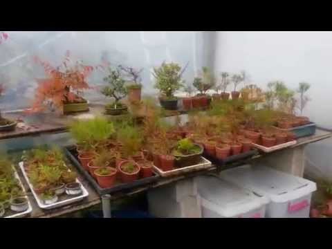 JKP cTV  BONSAI MUSEUM KOREA 분재 박물관