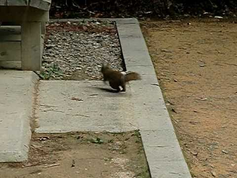 Squirrel in Takayama飛騨高山の野生リス