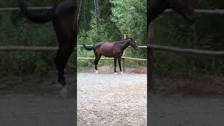 Watching Funny Animals Compilation   Funniest Animals 2020 #45