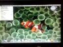 install Mac OS/X on Lenovo ThinkPad T61