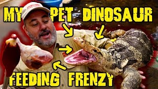 My Pet Dinosaur Feeding Frenzy