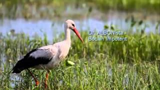 Dr. ALBONista - Bocian Impotent