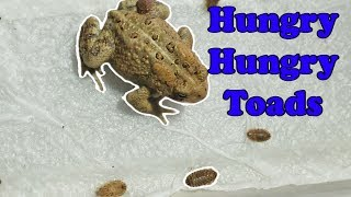 Feed My Pet Friday: Toads!