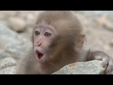 【SNOW MONKEY】 ☆Cute Baby☆