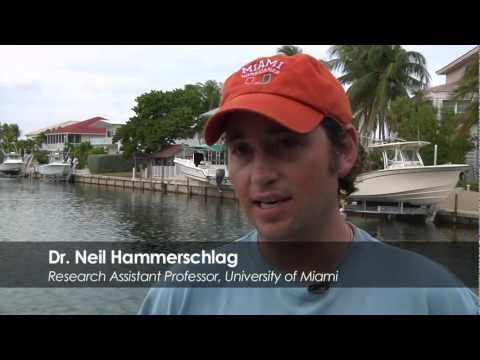 Does Ecotourism in the Bahamas affect Tiger Shark Movement and Behavior?