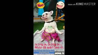 Dog Dance - Cùng quẩy với mêu nào