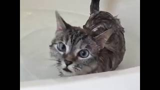 Funny Animal Funny Cat Video - Time to Take a Bath 01