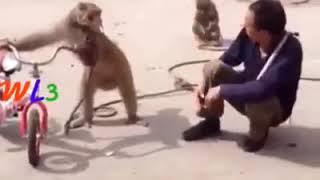 New funny videotape gshshsjwhjsjwgsus(2)
