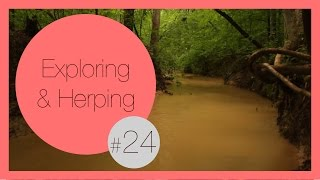 Creepy but Awesome River Discovery | Exploring & Herping #24