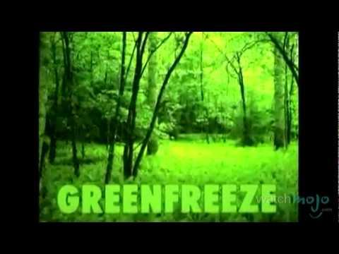 The History of Greenpeace: Environmental Activists