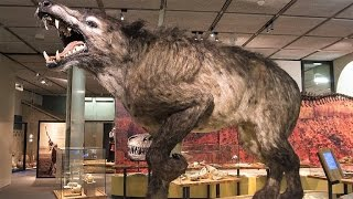13 LARGEST Land Mammals Ever