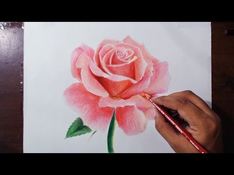 Drawing a Rose - Flower drawing series 1 - Prismacolor pencils