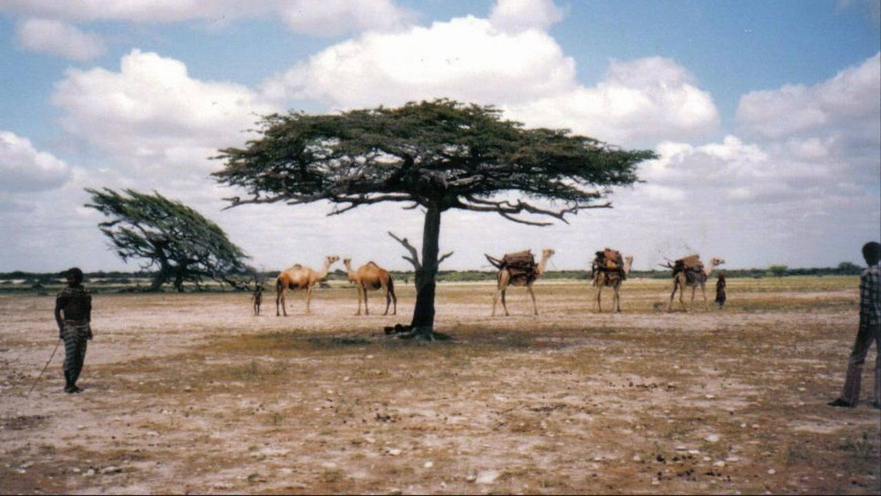 why is somalia considered one of Samaale, the oldest common ancestor of several somali clans, is generally  regarded as the source of the ethnonym somali the name.
