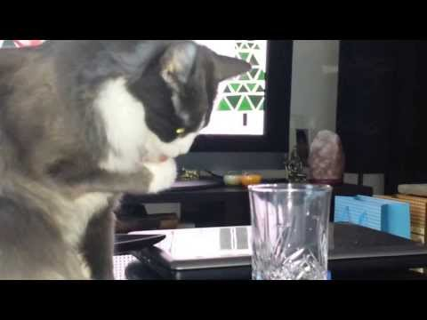 Naughty kitty drinking water.