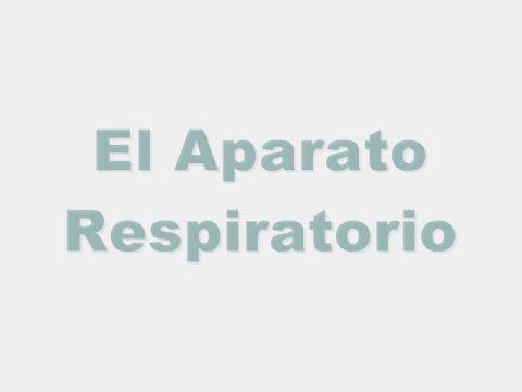 El aparato respiratorio.wmv