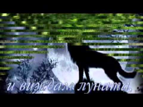 Вълк - Михаил Шуфутински video