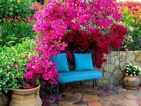 Вьющиеся цветы для сада