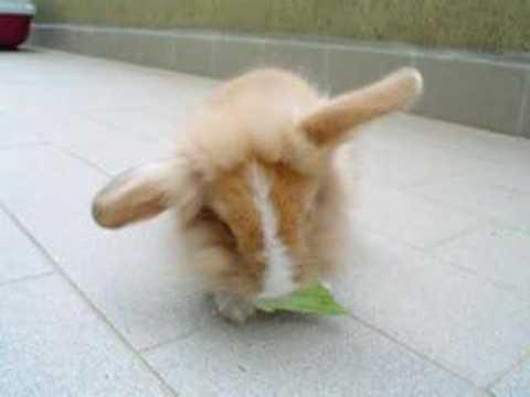 Il mio coniglietto nano
