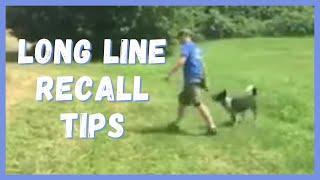 Dog Training | Long line recall tips | Solid K9 Training Dog Training