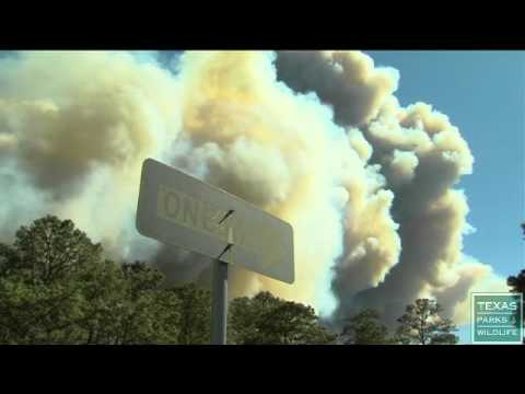 Wildfire at Bastrop State Park - Texas Parks and Wildlife [Official]