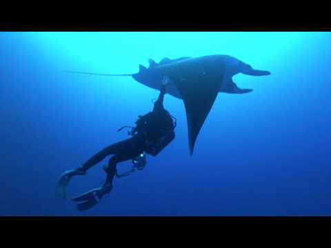 Discovering A Second Species of Giant Manta Ray