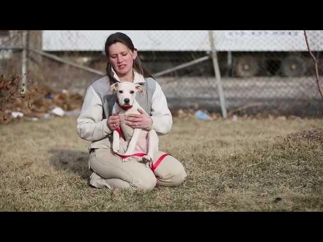 Meet Sophia - Adoptable Dog in St. Louis | Gateway Pet Guardians