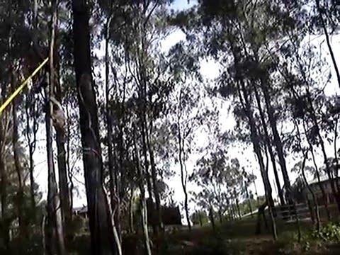 catching koala
