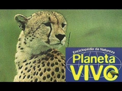 Planeta Vivo - Os Predadores Solitários