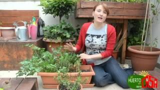 El huerto en casa 26 hierbas aromaticas