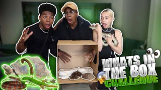WHATS IN THE BOX CHALLENGE! *craziest one yet*