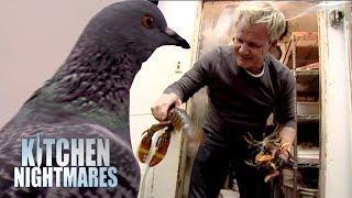 Ramsay Finds A Pigeon And More Dead Lobster In The Kitchen Kitchen Nightmares
