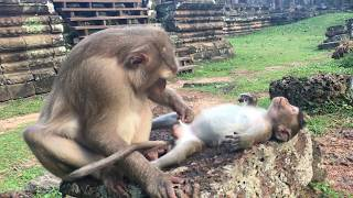 Mother slapped and beat her poor baby monkey forces him run to his lovely sister by crying so loudly