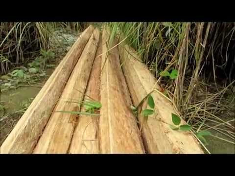 The never-ending Timber Poaching in Ipo Watershed (2014-08-30)
