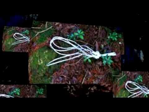 aokigahara forest japan. Walking Aokigahara - Japan#39;s Suicide Forest. 0:30. www.oneyeartrip.com 大人の遠足 Aokigahara. 大人の遠足 Aokigahara